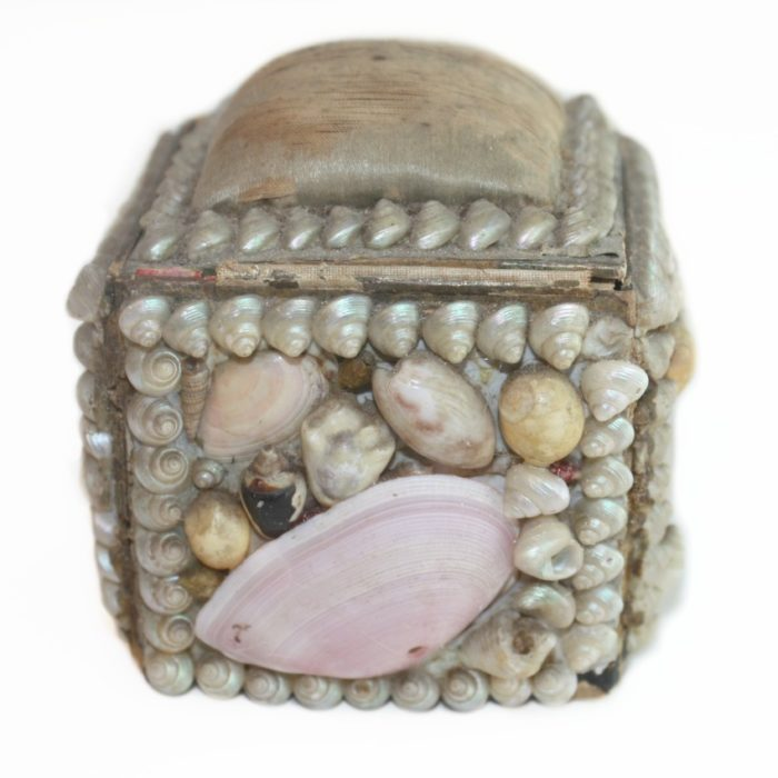 Collecting Antique Sea Shells