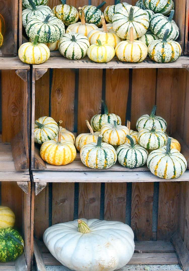 how to preserve your pumpkin