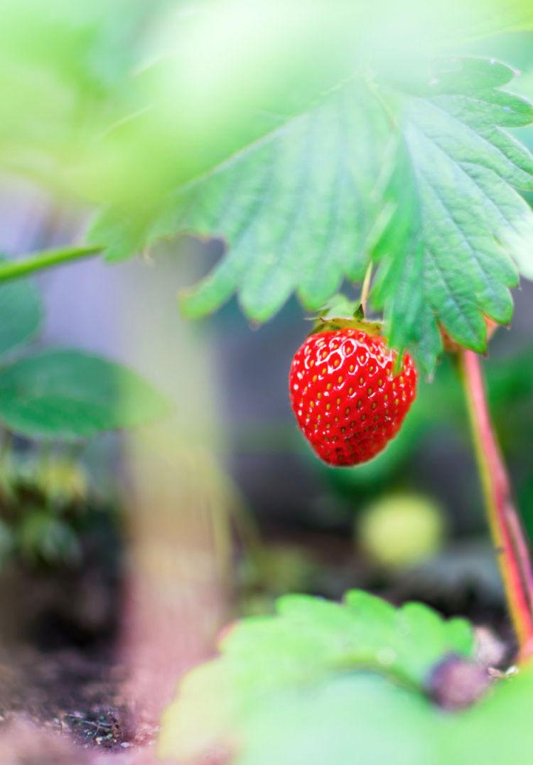 Romantic Strawberry Smash Cocktail