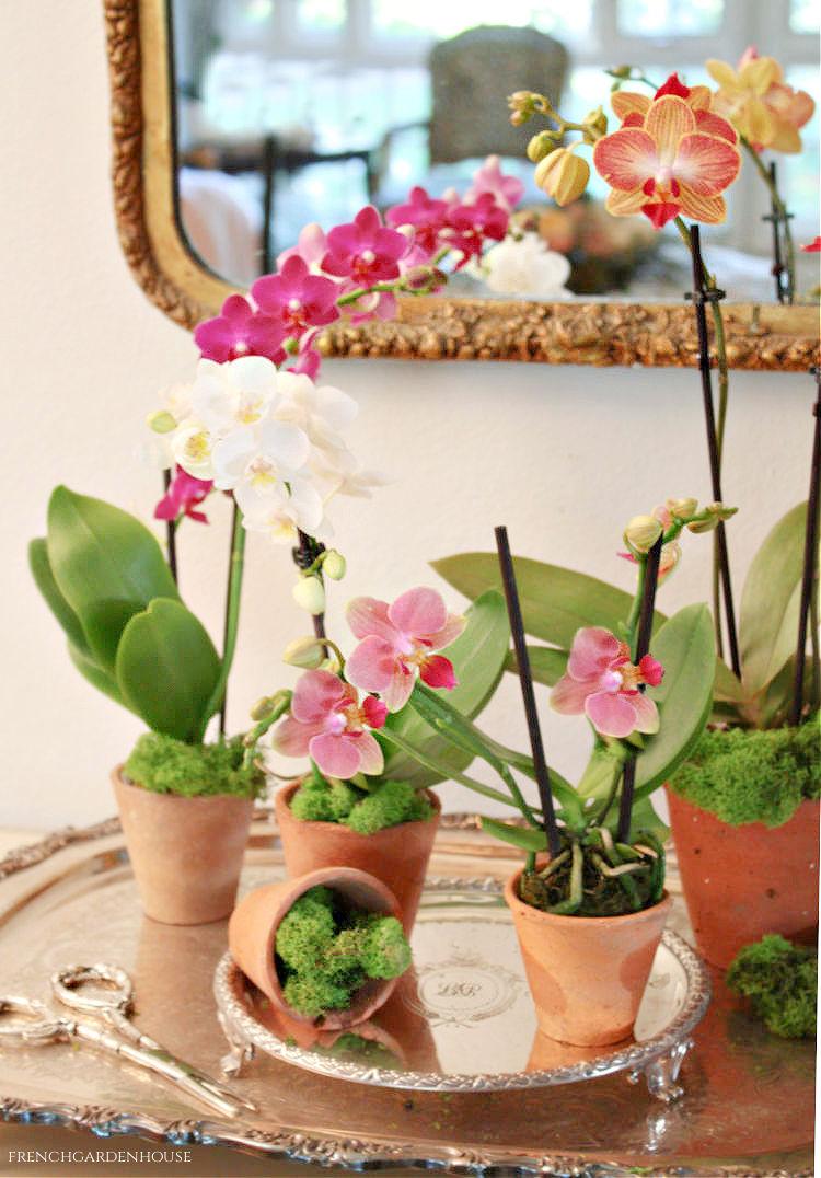 Antique French Greenhouse Pot Arrangement
