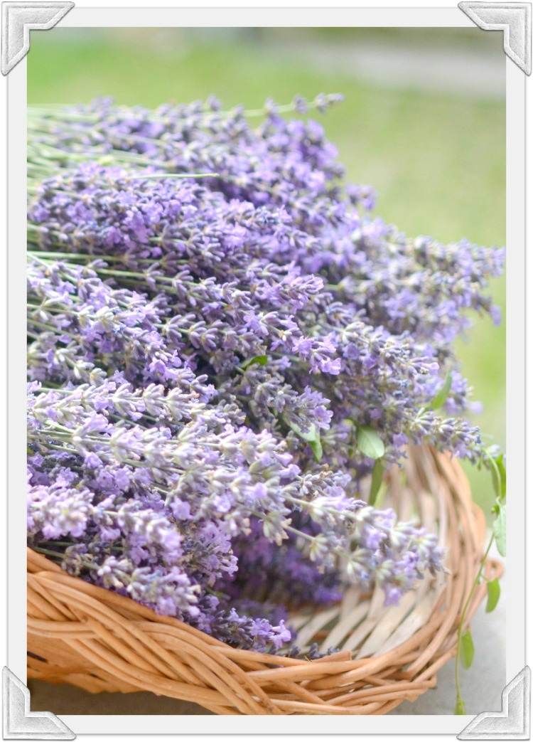 Lavender at Home