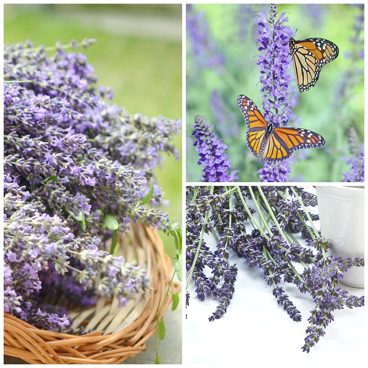 French garden lavender and butterflies