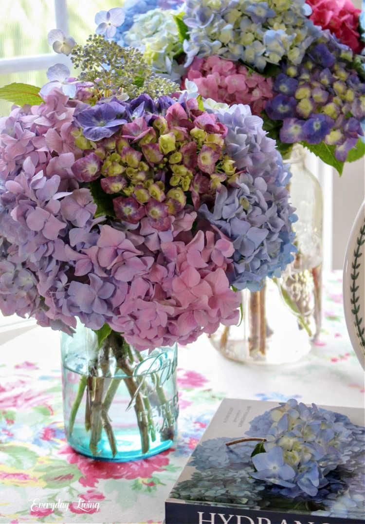 summer hydrangeas on table