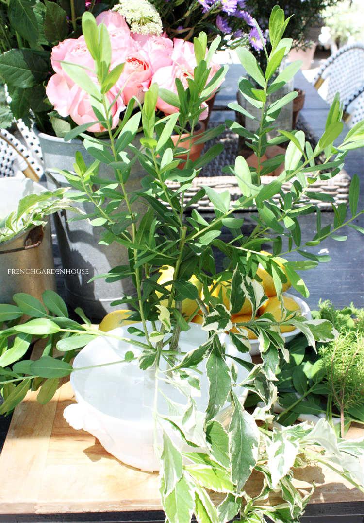greens for a summer flower arrangement