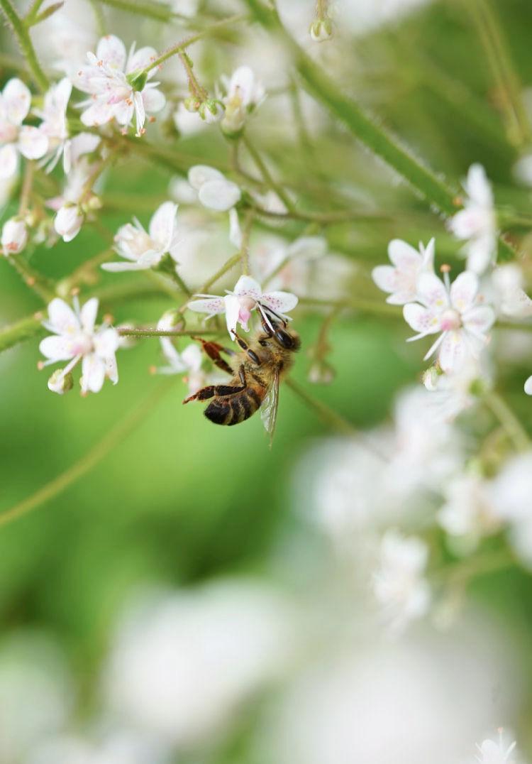 French Golden Honey Flower Arrangement