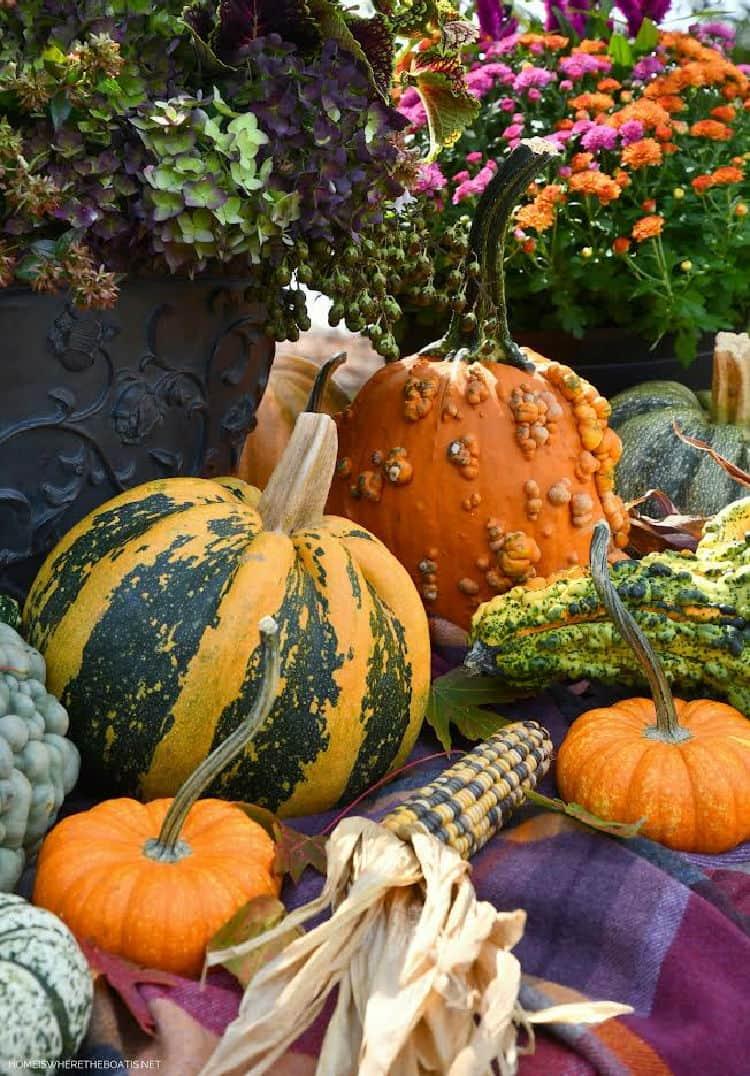 fall pumpkins in garden and mums