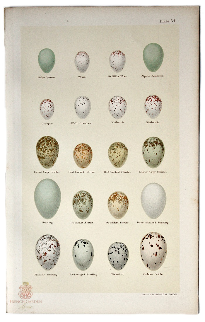 Diy Pallet Wall Cladding further Gold Marble Tiles Egg Shape Tub Gooseneck Tub Filler Glass Folding Doors as well Knee Length Convertible Bridesmaid Dress In Robins Egg Blue Lace Itembd further Antique Bird Egg Print Wren furthermore Egg New. on chic in egg