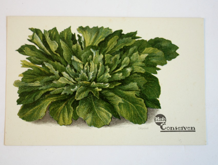 Antique Chromolithograph Vegetable Postcard Lettuce