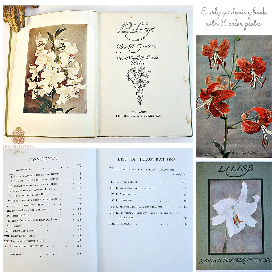 Antique Gardening Book Lilies with Color Plates