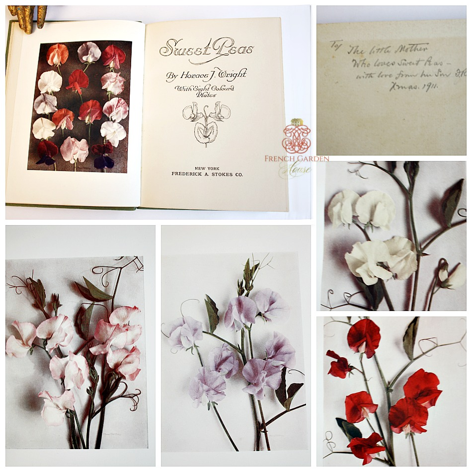 Estate Antique Gardening Book Sweet Peas with Color Plates