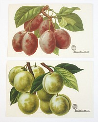 Antique Chromolithograph Fruit Postcard Set of 2 Plums