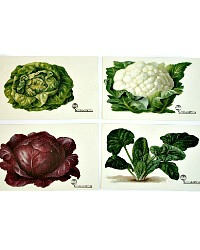 Antique Chromolithograph Vegetable Postcard Set of 4 Cabbage