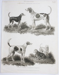 Antique Early 19th Century Dogs Steel Engraving Fox Hound Terrier