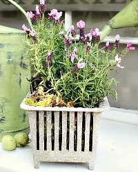 Aged Patina Shabby Cast Metal Footed Planter