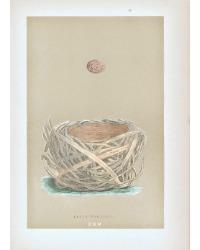 Antique Engraved Nest & Egg Savi's Warbler Print