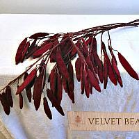 Autumn Wine Velvet Bean Pod Stems Set of 5