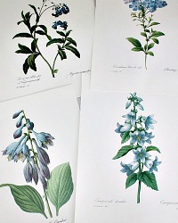 Botanical Floral Prints Set of 5 Blue Redoute