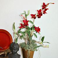 French Red Orchid in Gilded Pot