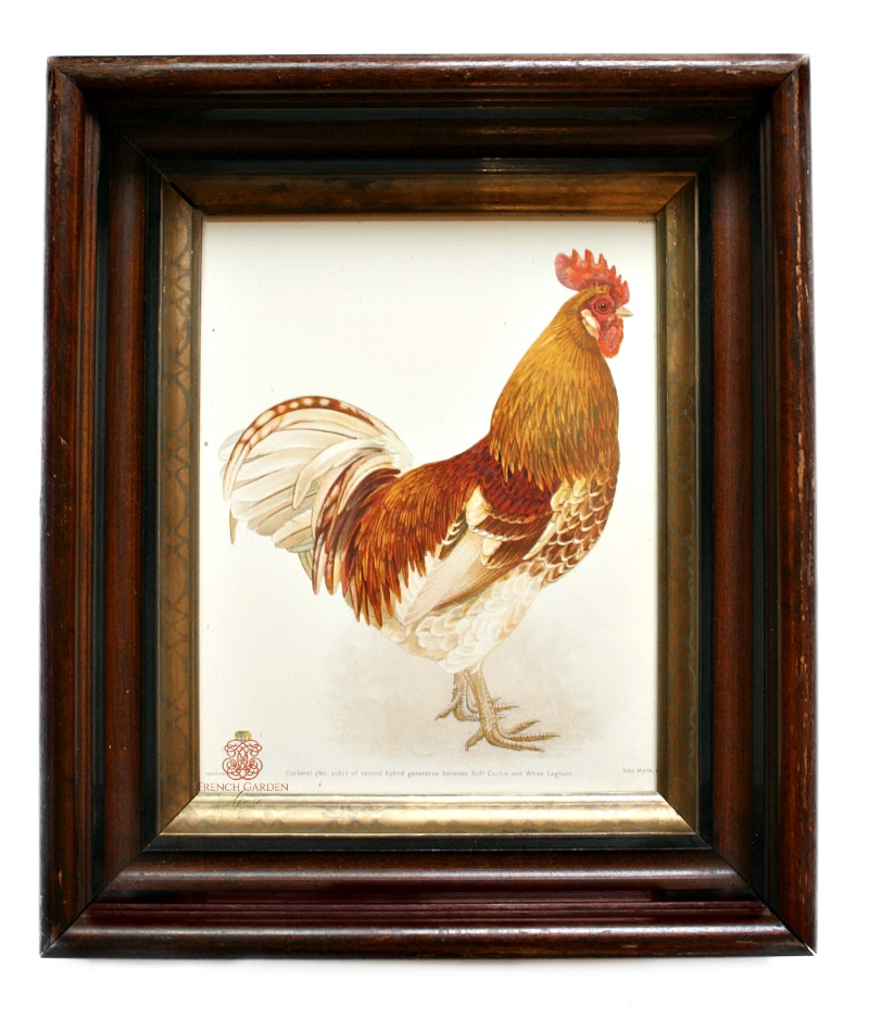 Antique French Country Chicken and Cockerel Framed Prints Pair