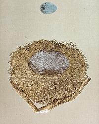 Antique Engraved Nest & Egg Bullfinch Print