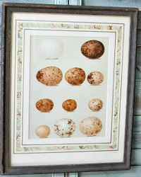 Antique Estate Egg Print Wood Frame Large Hawk