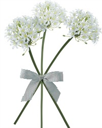 Lily of the Nile Stems White