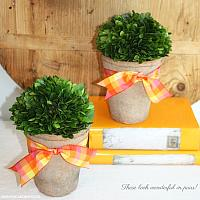 French Country Preserved Buxus Topiary