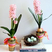 French Garden Potted Pink Hyacinth