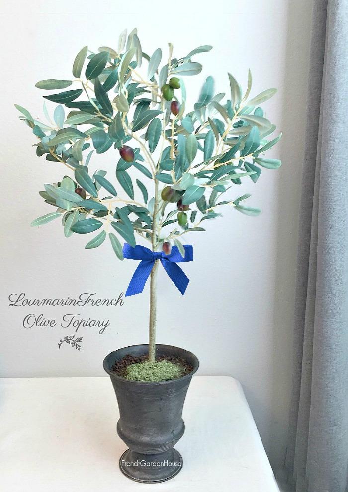 Lourmarin Olive Topiary