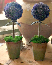 20% OFF-French Country Purple Sedum Topiaries Set of 2