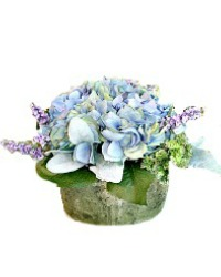Heavenly Provence Blue Hydrangea
