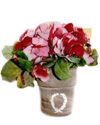 Merlot Garden Hydrangea