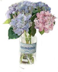 Hydrangea Stems Garden Dreams
