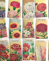 Antique French Seed Packets Flowers Set of 5