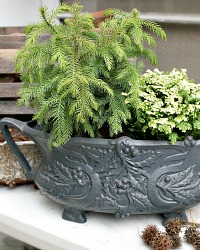 Antique French Dark Grey Painted Jardiniere Planter Holly
