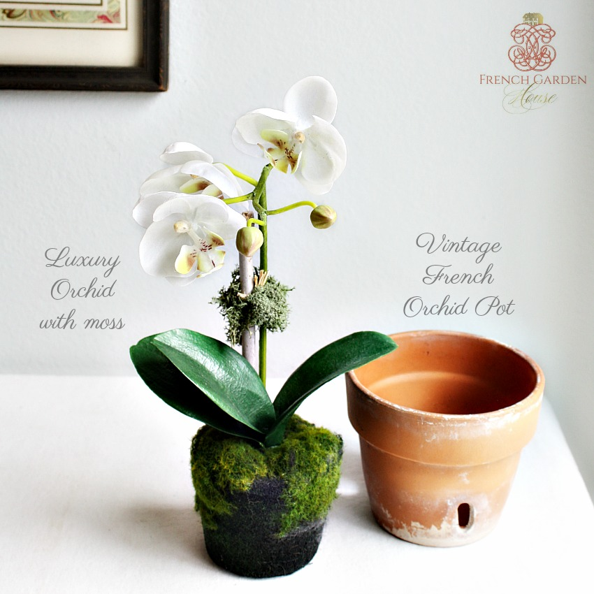 French Petit White Orchid