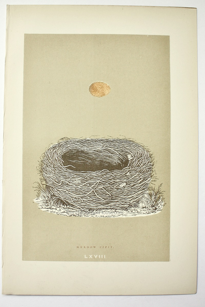 Antique Engraved Nest & Egg Meadow Pipit Print