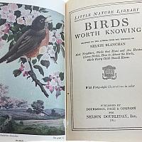 Vintage Nature Book Birds Color Plates