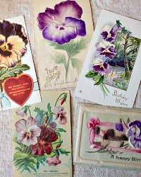 Antique Pansy Postcards Set of 5