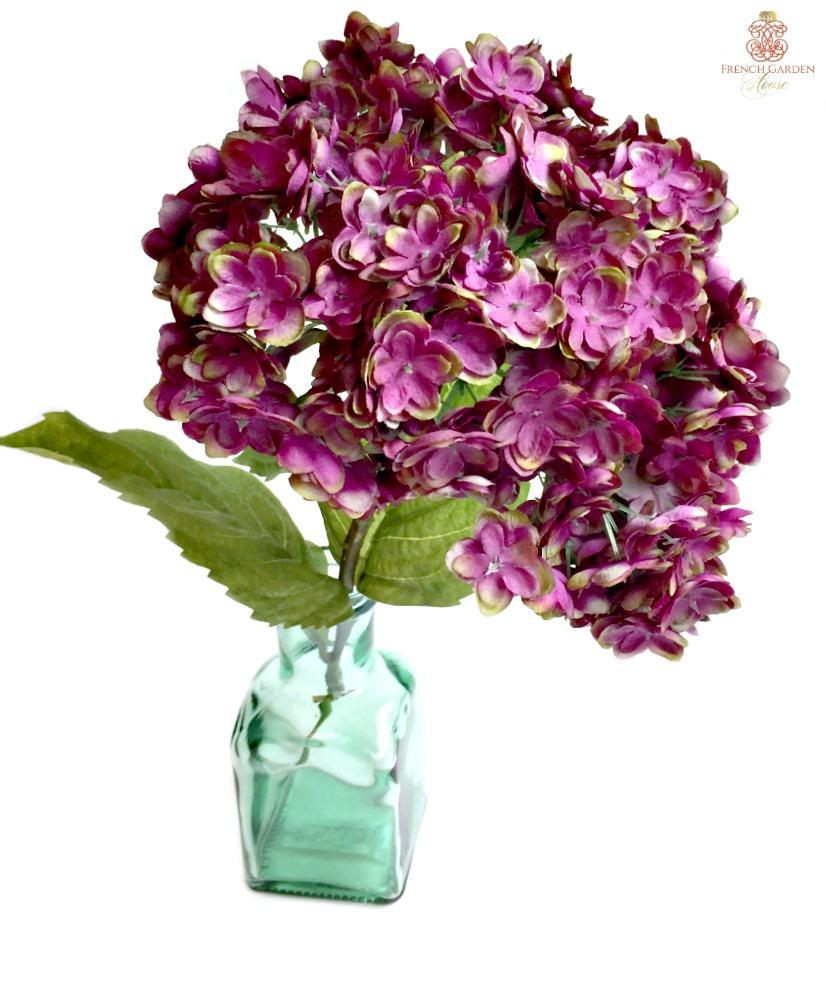 Hortensia Frais Plum