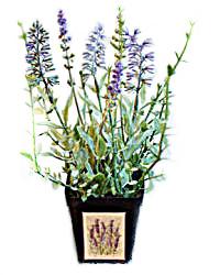 Petite Grower's Faux French Lavender Pot