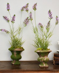 French Country Lavender Petit Moss Pot Pair