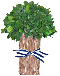 Preserved Boxwood St. Remy de Provence Topiary