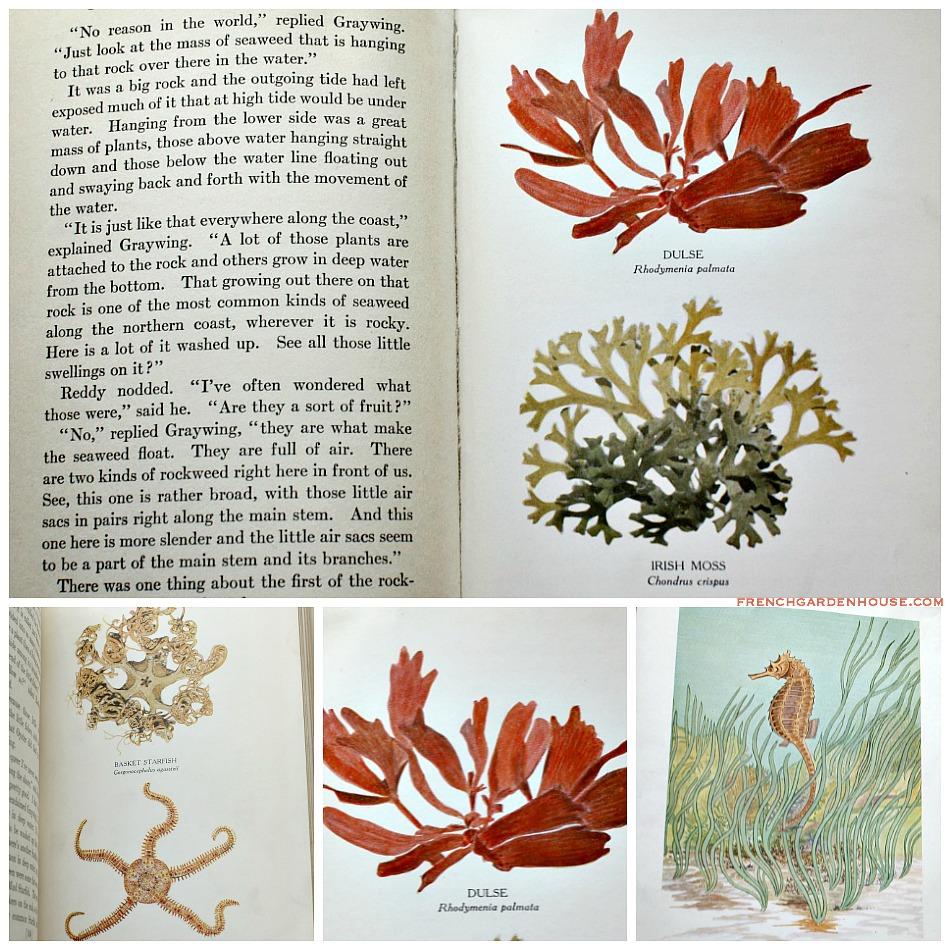 Vintage 1930's Burgess Sea Shore Book for Children
