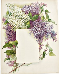 Antique Lilac Chromolithograph Flower Print