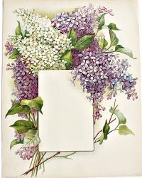 Antique Lilac Chromolithograph Flower Print