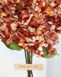 Hydrangea Stems Warm Autumn Bunch