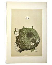 Antique Engraved Nest & Egg Wren Print