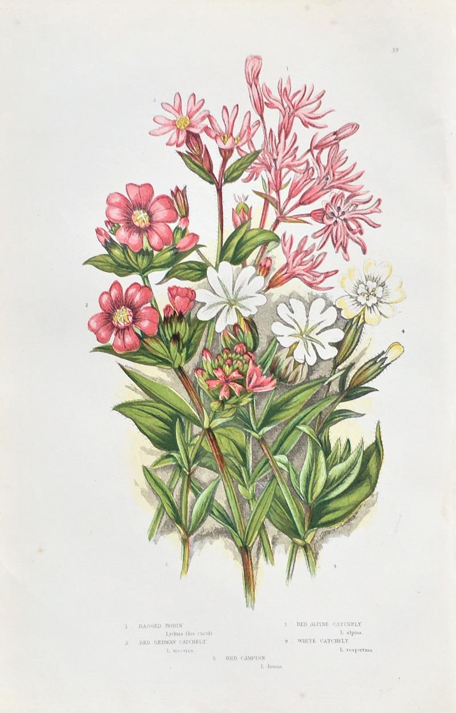 Antique Botanical Chromolithograph Print Robin