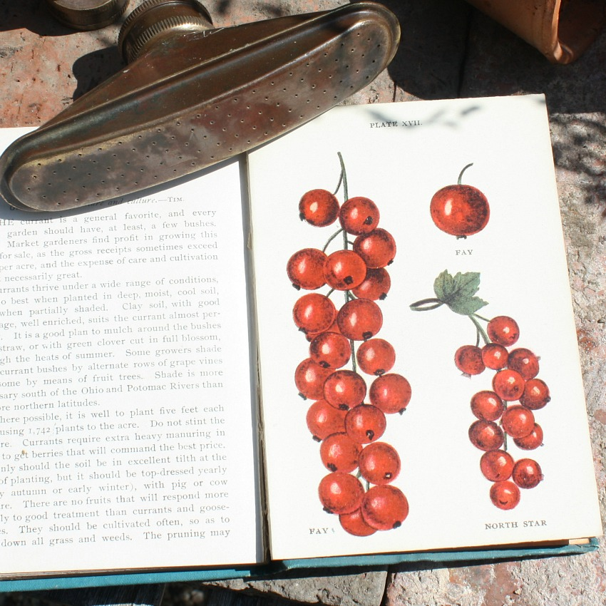 Antique Berry Book with Color Illustrations